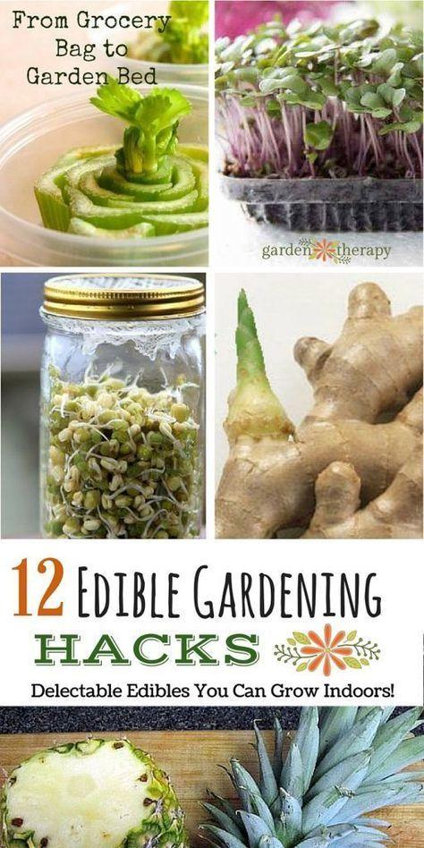 12 Edible Gardening Hacks Delectable Edibles You Can Grow 640 x 480