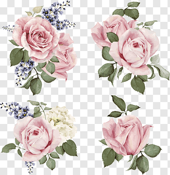 Rose Illustration Flower Illustration Hand Painted Roses Four Pink Rose Clusters Free Png Flower Illustration Pink Flowers Background Pink Flower Painting
