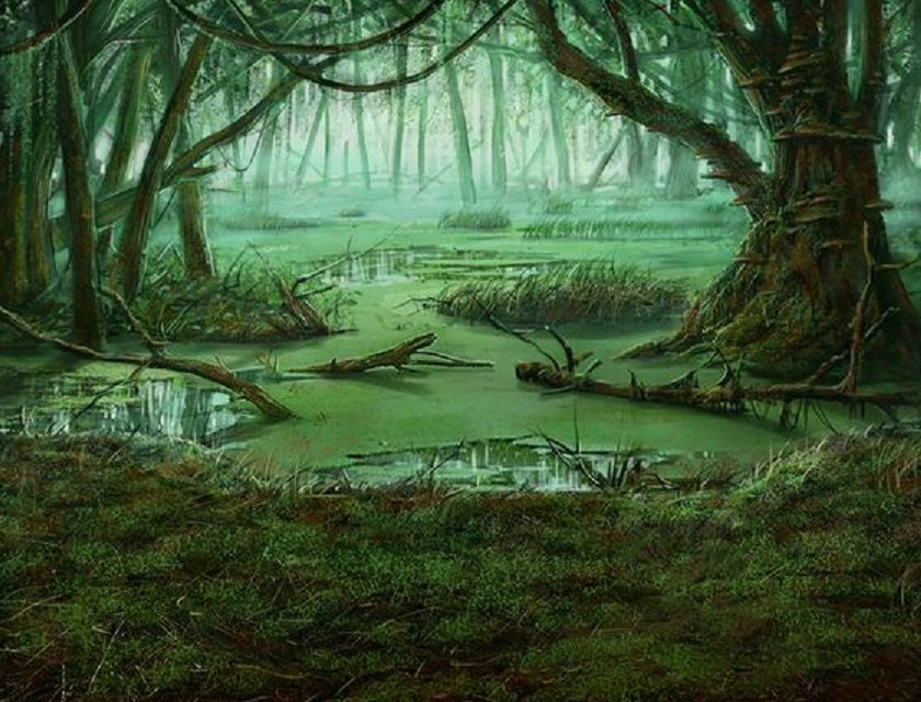 Image result for swamp background