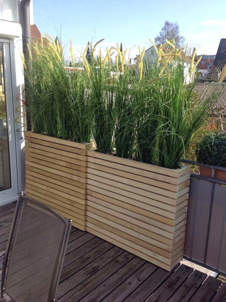patio privacy plants backyard privacy