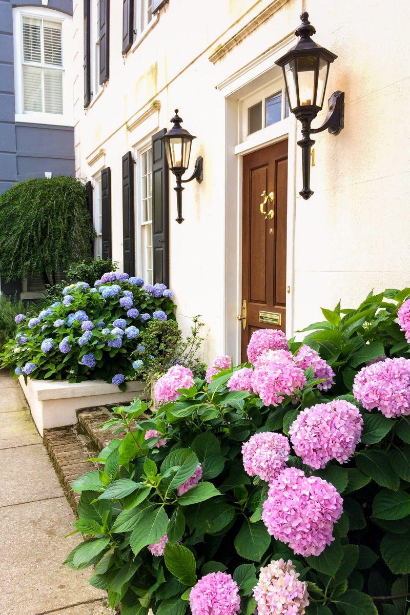 Pink and Blue Hydrangeas, Charleston, SC via Hue and Eye