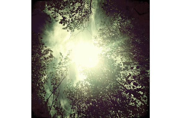 Forest photography nature photography wall art sun by SpringBurst