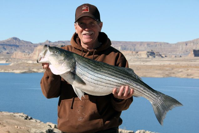 Lake Powell fishing report - Trophy time for striped bass | Fishing