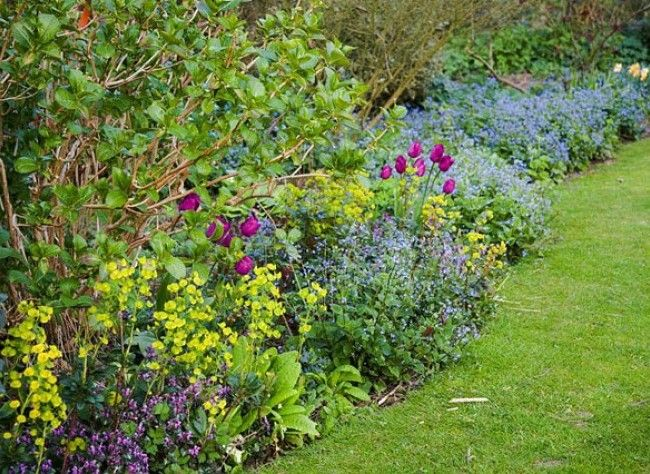 Installer une bordure de vivaces la tulipe vivace et for Plante fleurie exterieur vivace