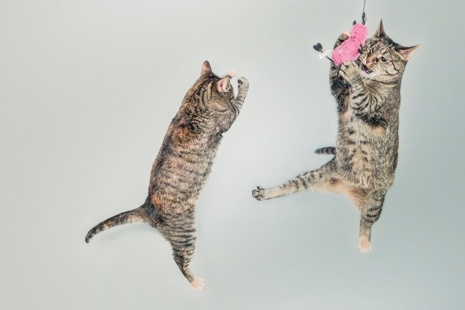Pet Psychic Animal Communication Classes Dog People Indoor Cat Cat Care