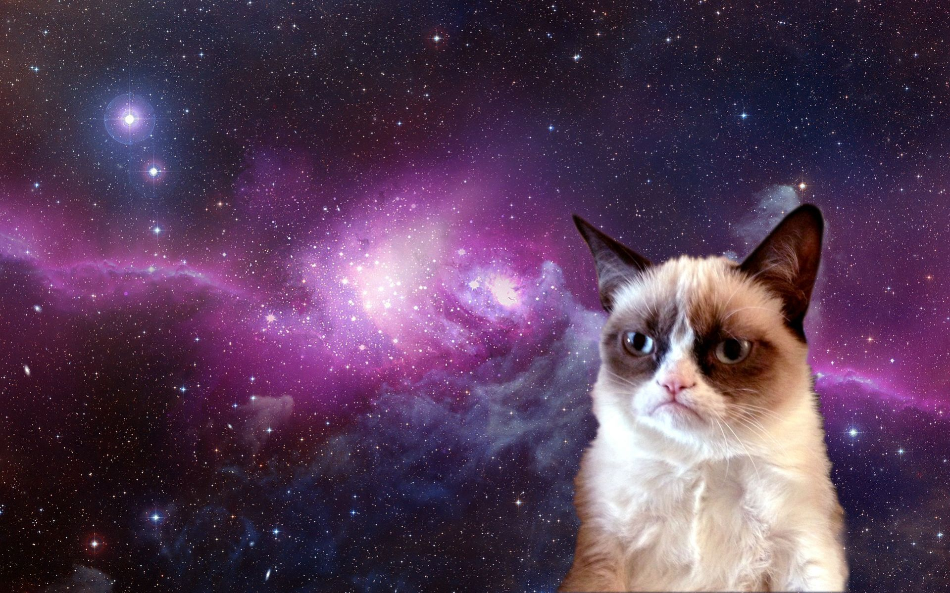 Grumpy Cat In Space 1920x1200 Junk Drawer Grumpy Cat Grumpy