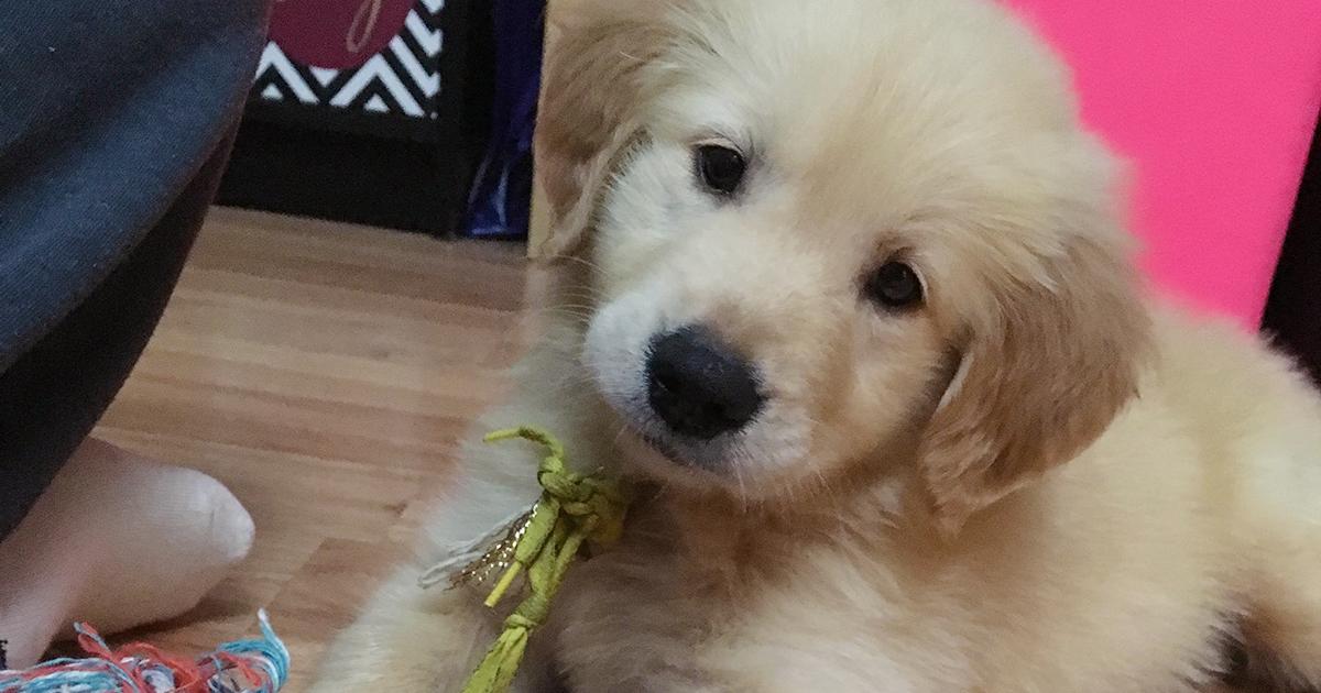 Aspca Files Lawsuit On Behalf Of Pet Leasing Victims Aspca Pets Animal Lover