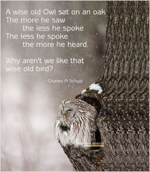 A wise old Owl sat on an oak..