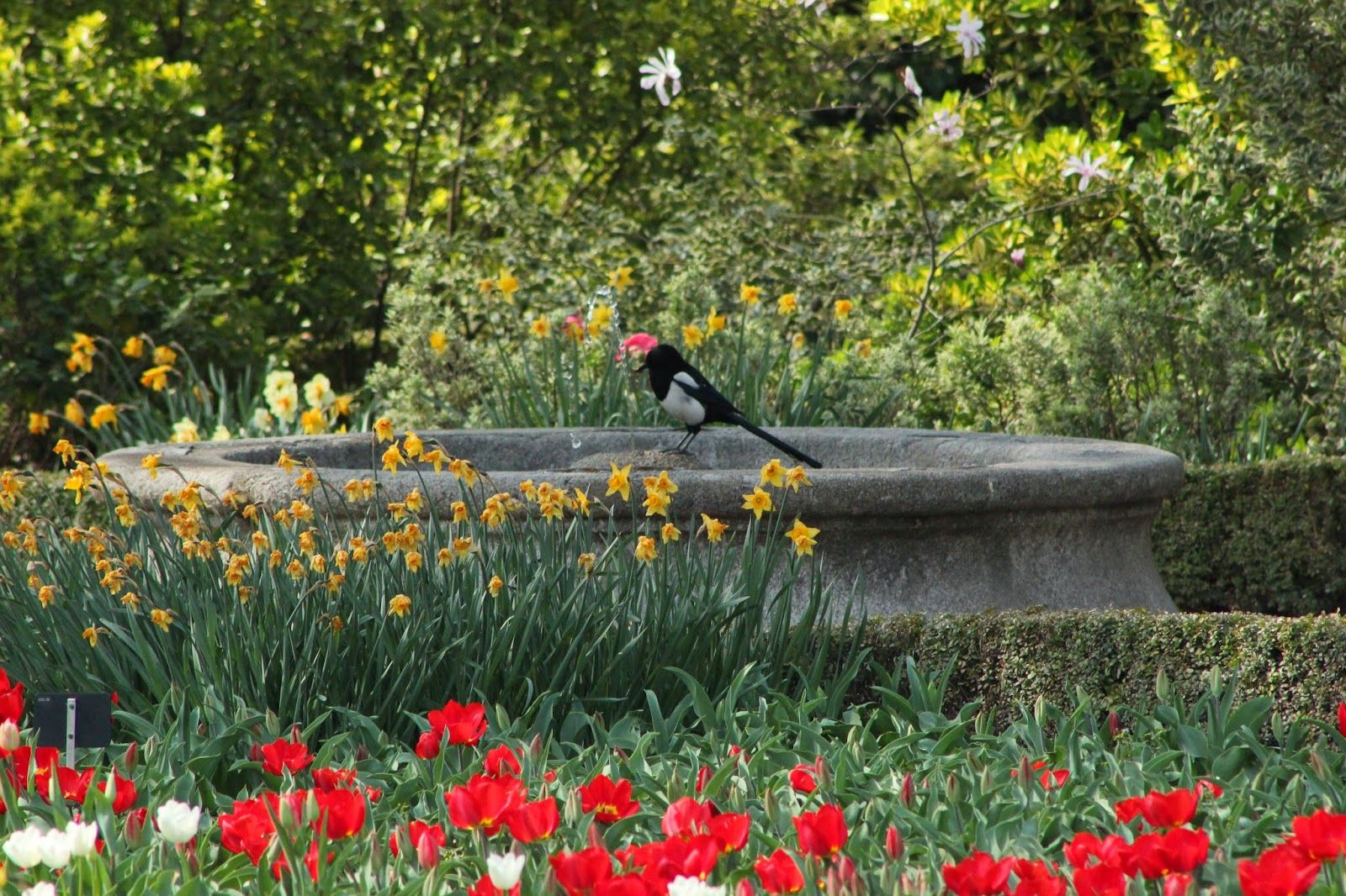 Imagenes De Jardines Con Flores: FyJ En Bogot Flores Y Jardines T Jardn Y Flores