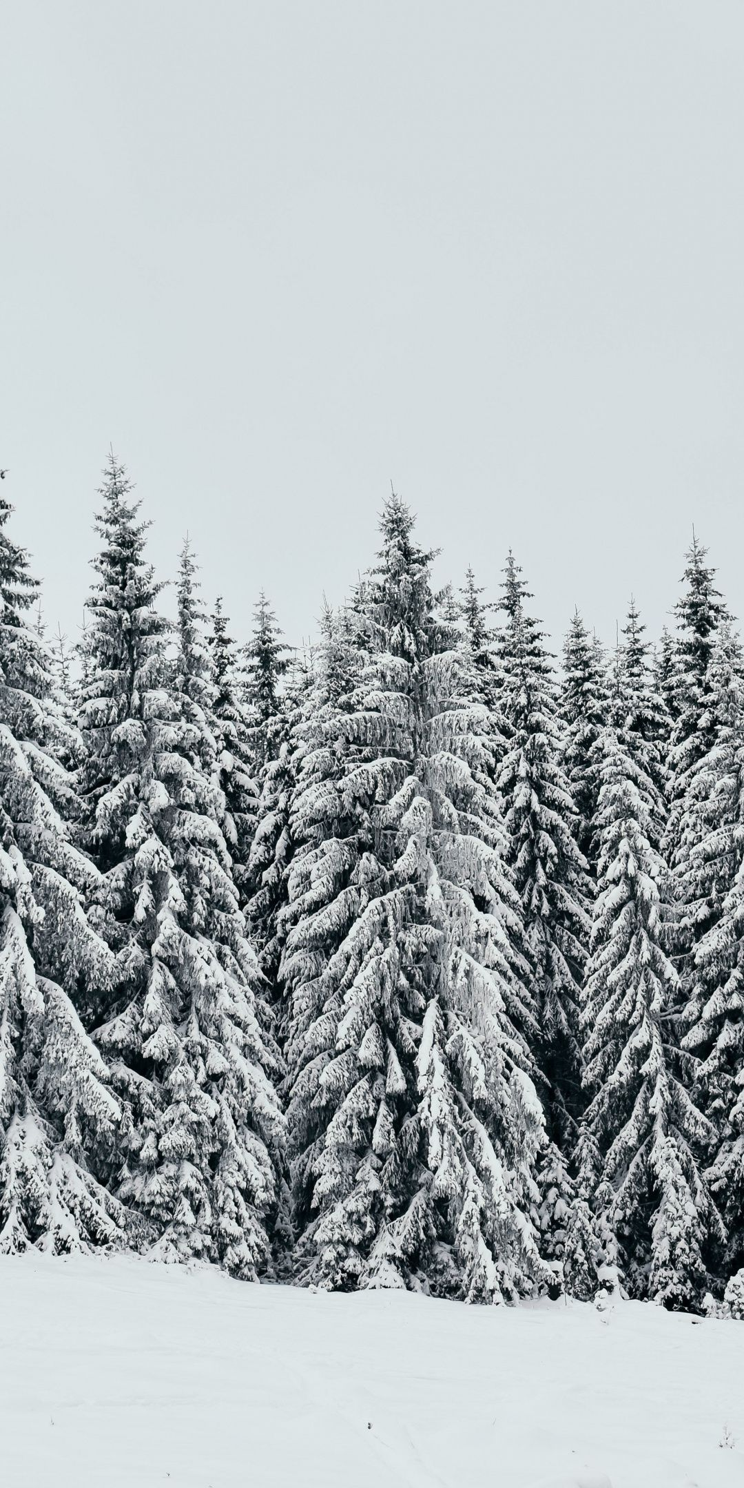 White Snow Layer Pine Trees Nature 1080x2160 Wallpaper Tree Wallpaper Iphone Iphone Wallpaper Winter Snow Tree