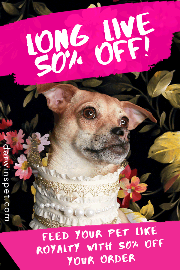 Don't miss out! Treat your pet like royalty by feeding