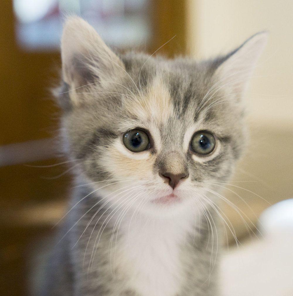 Hangriest Kitten Ever Https Www Youtube Com Watch V Zukb3acsfdg Kitten Foster Kittens Cats