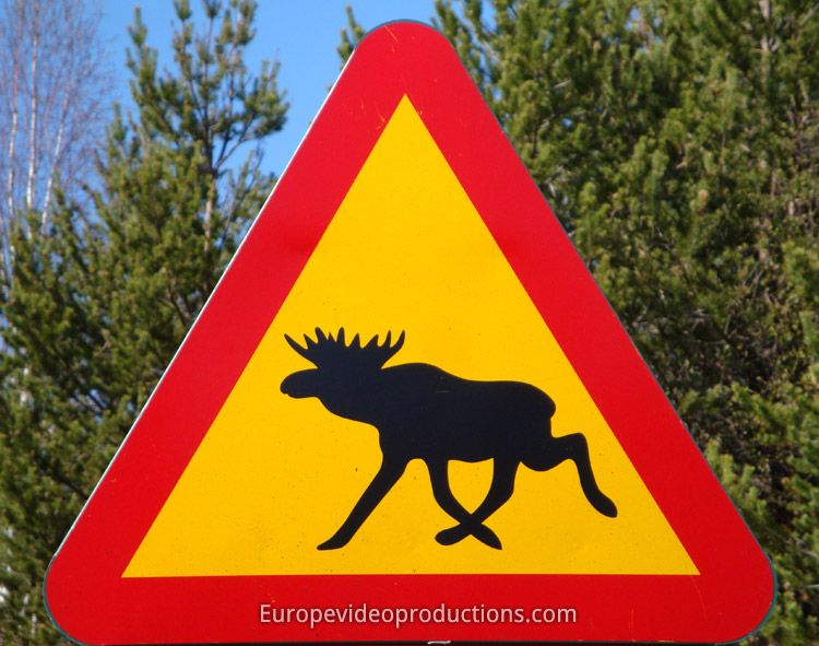 Swedish Alert Elk Road Sign