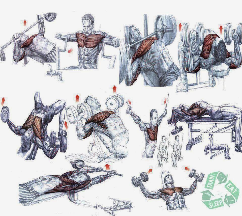 картинки с упражнениями для бодибилдеров долго