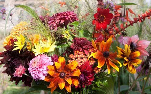 Картинки цветы сентябрь