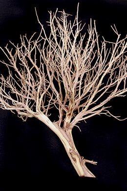 Natural Tree Branches Sale Artificial Trees Sandblasted Artificial Tree