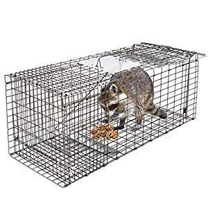 How To Get Rid Of Raccoons From Your Backyard in 2020 ...