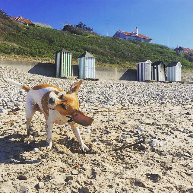 Happiness på stranden #frengle #rågeleje #rågeleje #strandhytte #dansksommer #nordsjælland