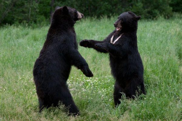 Soñar con osos - Esoterismos.com