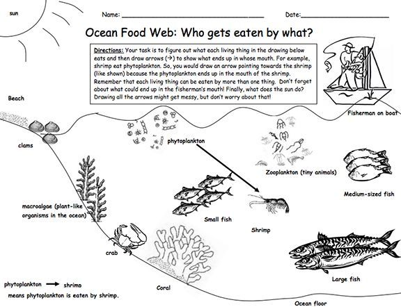 Here's a <b>lesson</b> and materials on a marine <b>food</b> web ...