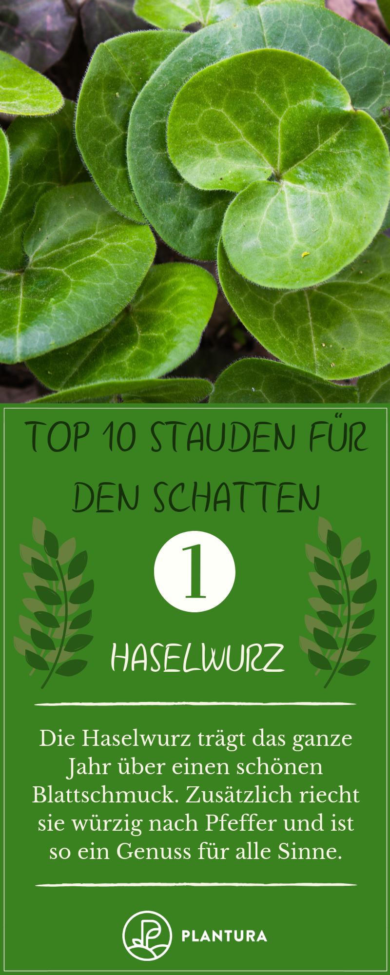 stauden f r den schatten unsere top 10 garten garden. Black Bedroom Furniture Sets. Home Design Ideas