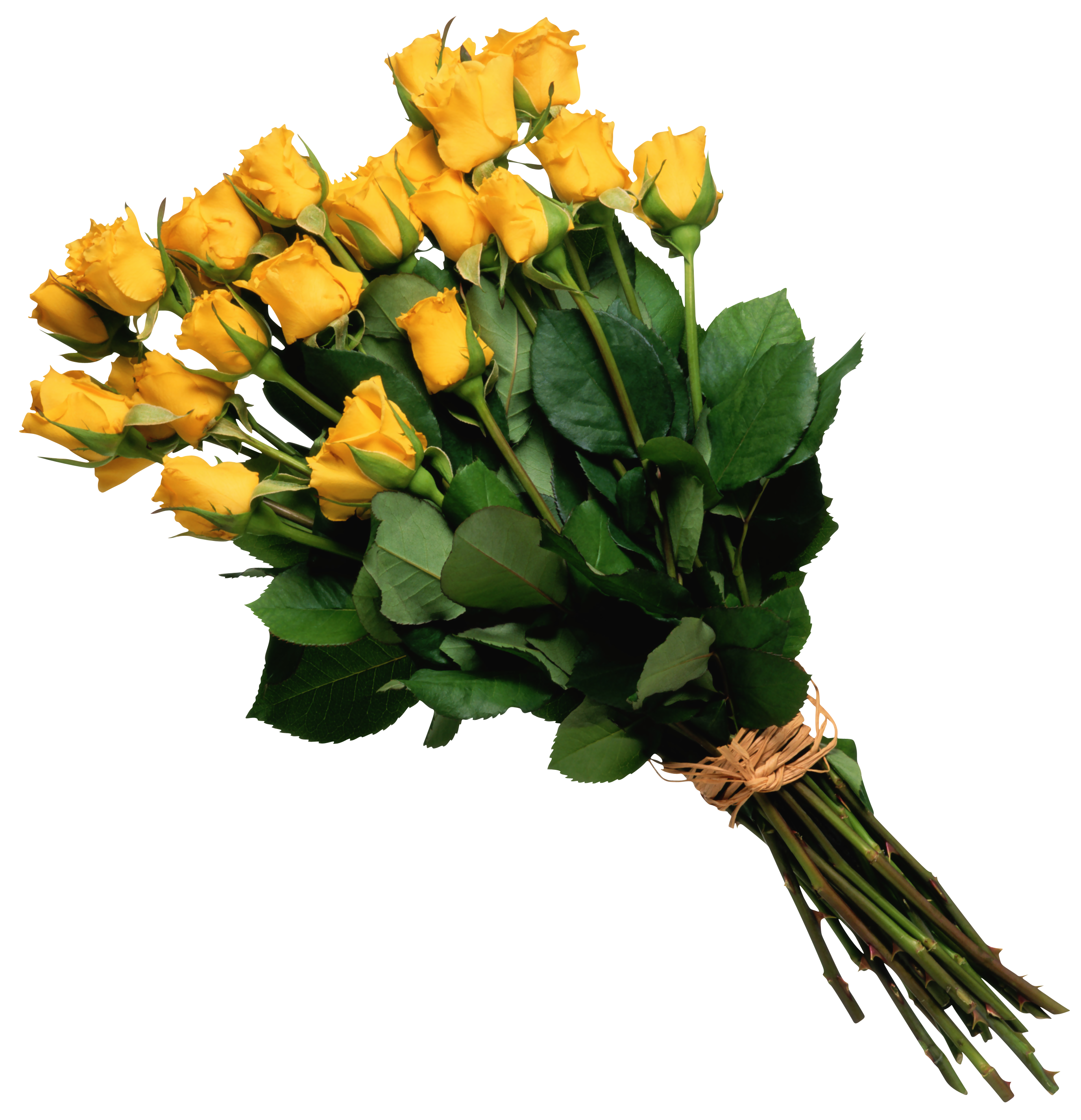 Yellow_Rose_Bouquet_PNG_Picture.png (2747×2847) Ramos de