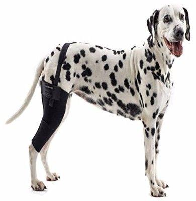 8 Kruuse Rehab Knee Protector For Dogs Dog Braces Dog Leg