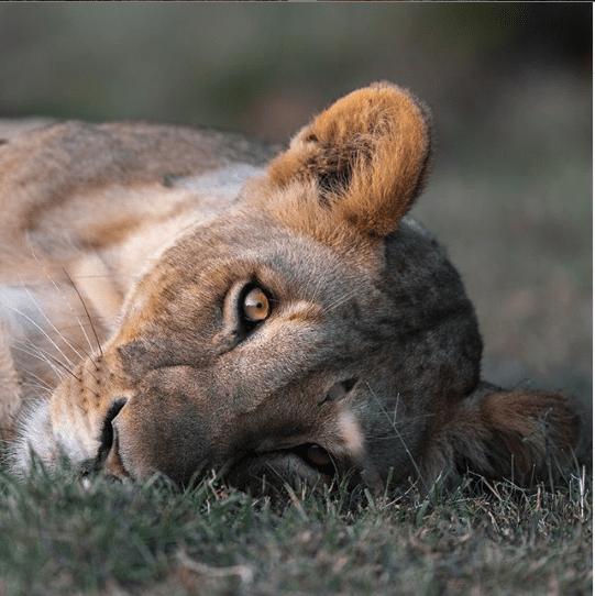 Pin by Madeleine Puckett on Animals Rare in 2020 Huge cat