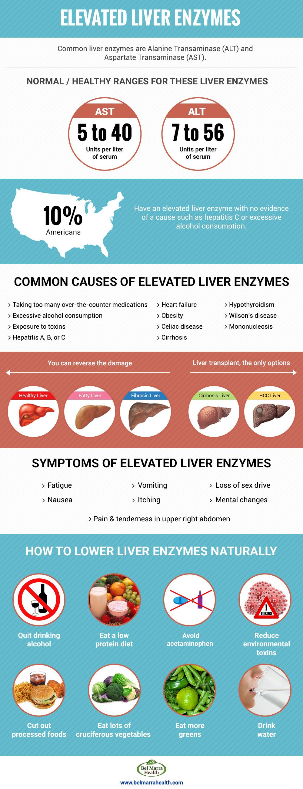 Understanding Elevated Liver Enzymes Elevated liver