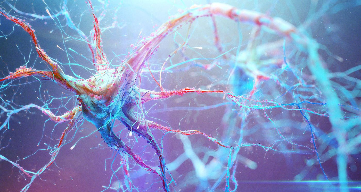 Картинки нейроны мозг