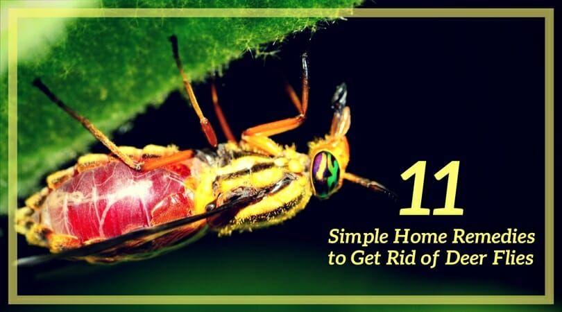 how to get rid of horse flies and deer flies