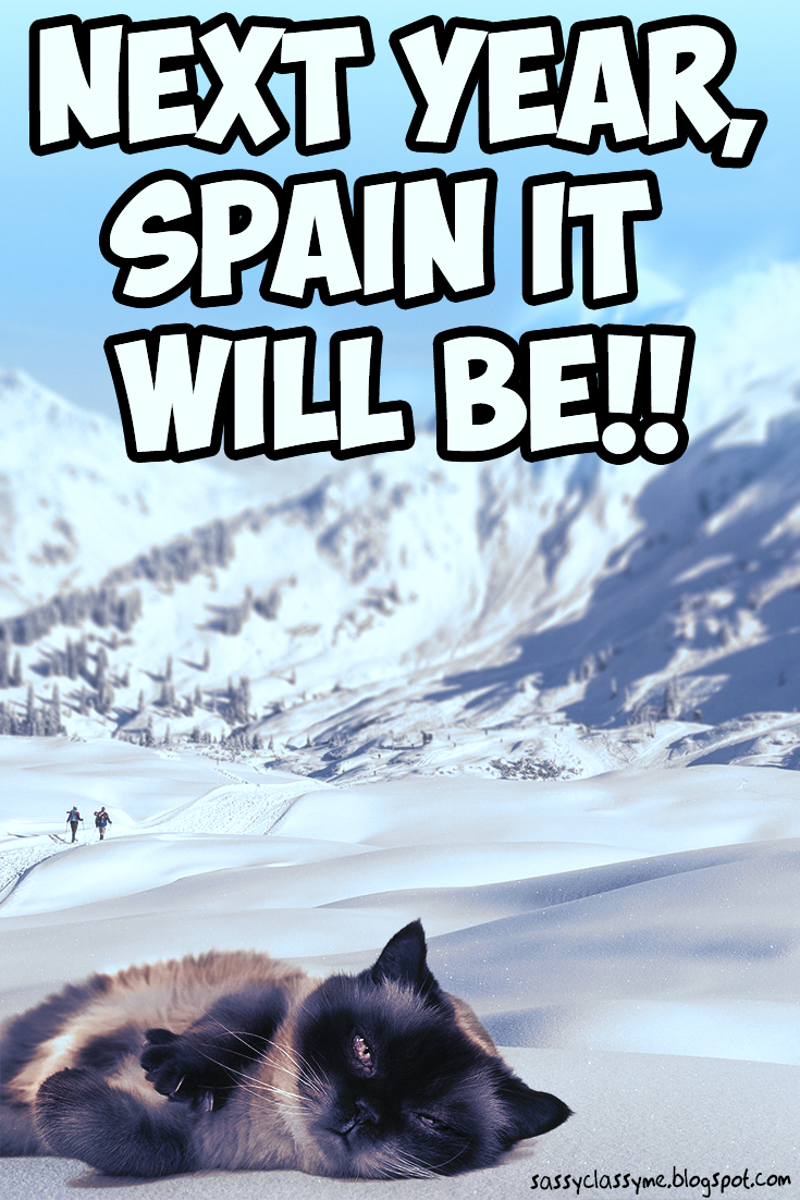Animal Memes Next Year Spain It Will Be Memes Funniest