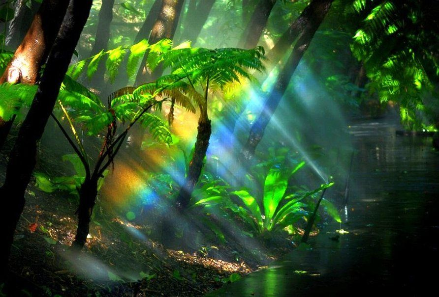 Rainbow Fern Gully Rainforest Wallpaper Rainforest