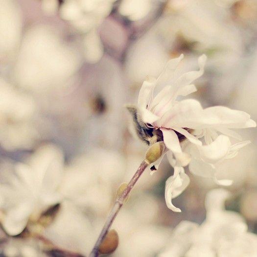 . i-love-flowers