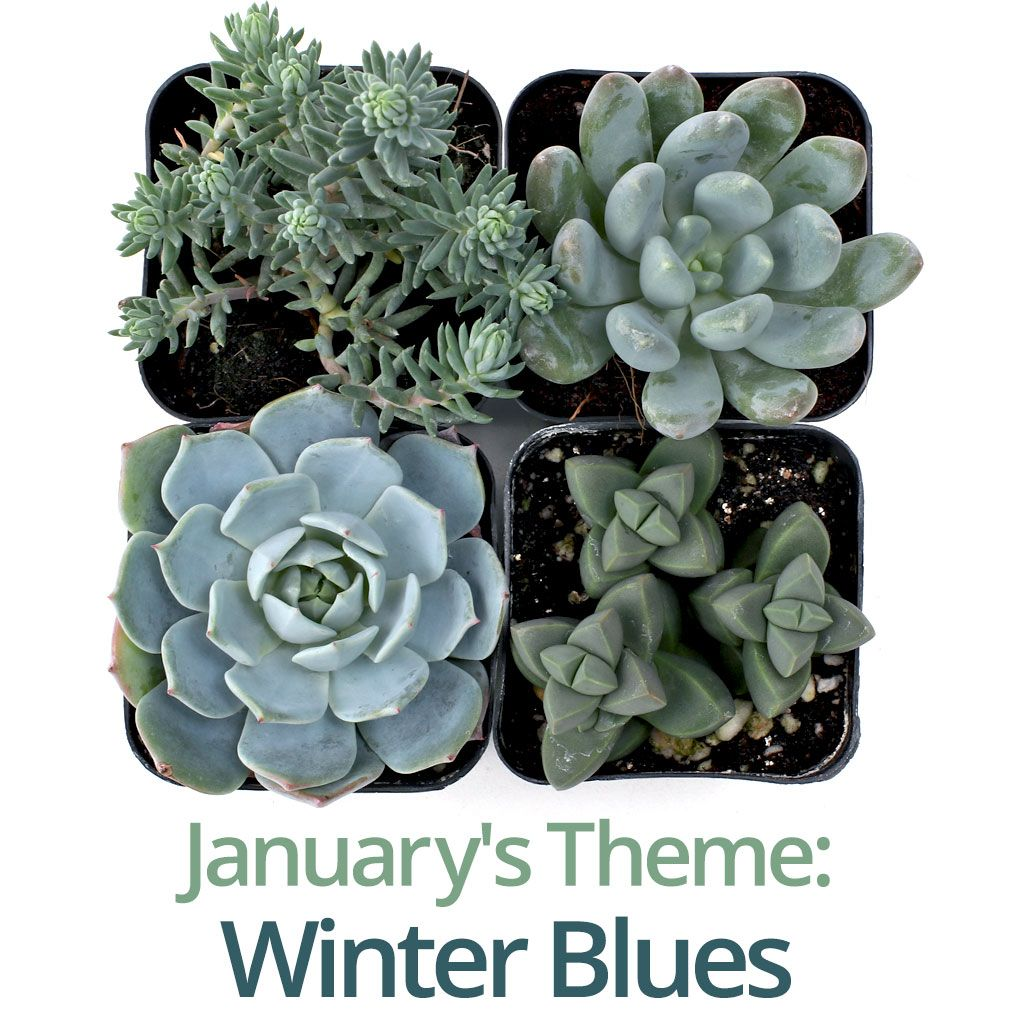 Monthly Subscription Box Plants Succulents Plant Sale