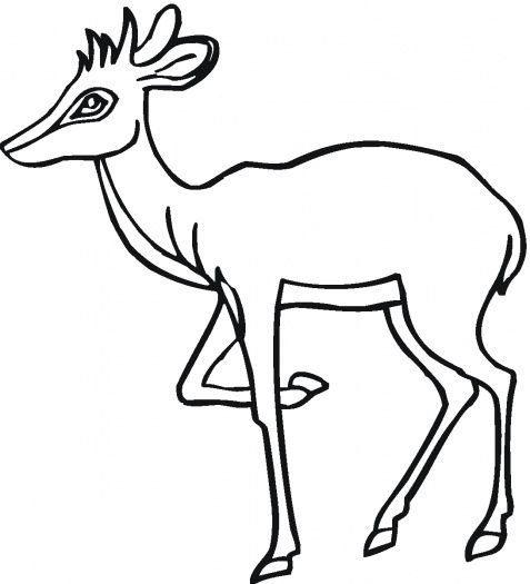 Antelope 19 Coloring Pages Free Printable Coloring Pages