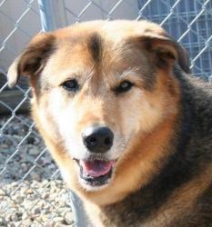 Adopt Taya On Petfinder Unique Dog Breeds Rare Dog Breeds Popular Dog Breeds