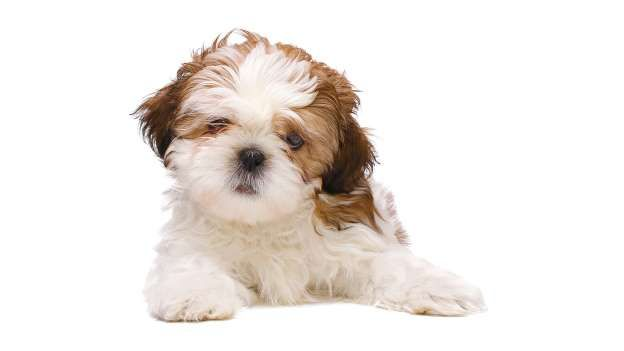 Gentle Affectionate And Curious Are The Best Adjectives To Describe Gemini S Personality So What Is As Cute Puppy Pictures Puppies Cute Puppies