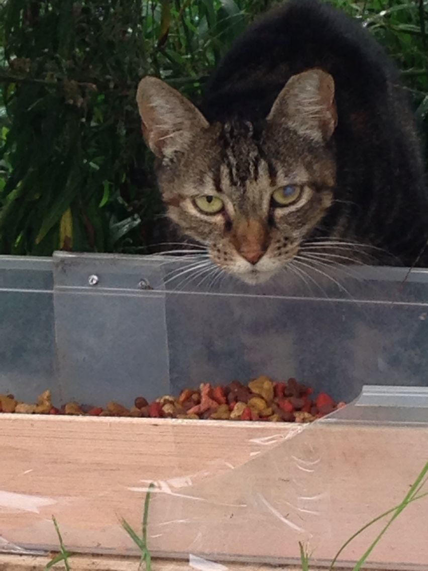 TNR works!!!! 8 years and living in colony. Spay and