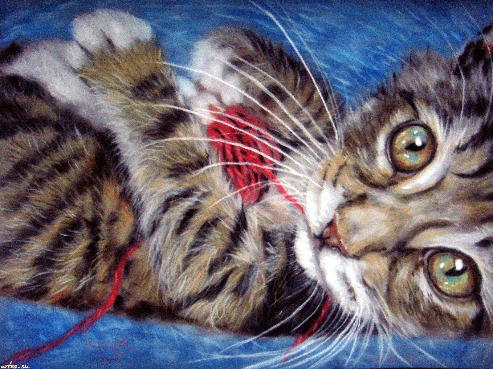котенок играет с клубком, Paul Knight (With images) | Cat ...