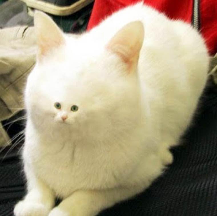 070fc02d75b30de0484f30c67eeaa815 25 random funny pics to inspire your humor bone prettiest cat
