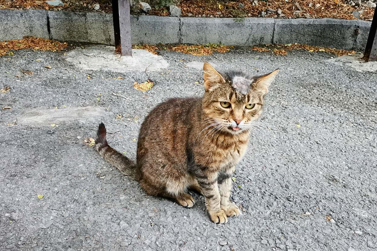 Can you get ringworm from a cat cats cat symptoms