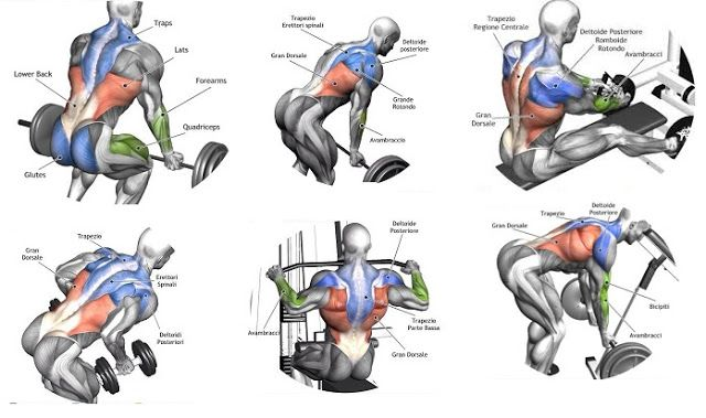Back Exercises … | Pinteres…