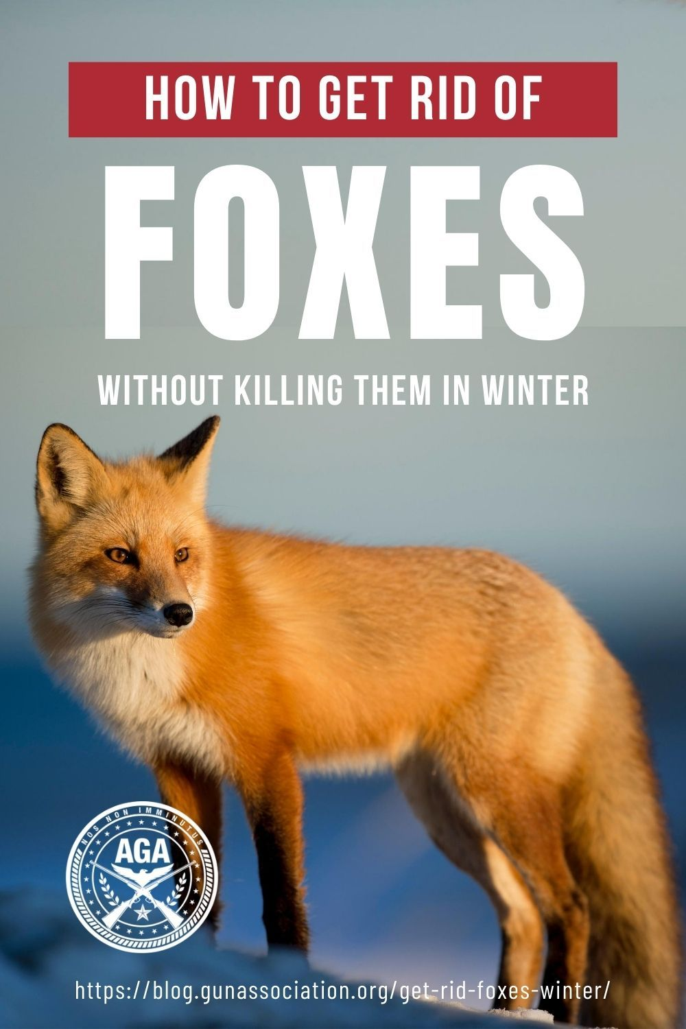 Do foxes occasionally visit your property check out these