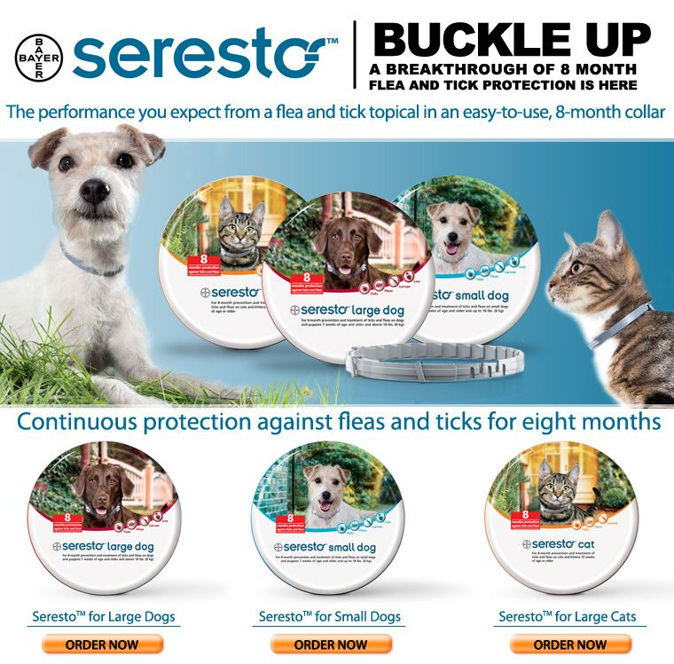 Seresto flea and tick collar. I am actually excited about