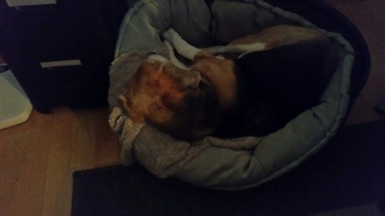 JEFF IN TRAINING 11/01/2017 Battersea dogs home