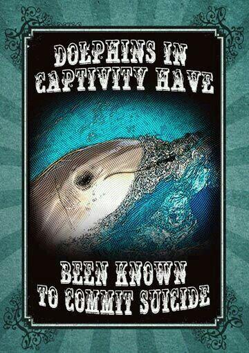 Delfine in Gefangenschaft sind dafür bekannt, Selbstmord zu begehen. #Artgerecht ist nur die #Freiheit © FB.wau.wau.rudeltier