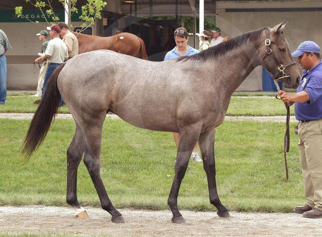 Smoke Glacken | 511 Smoke Glacken - Echo Harbor colt  My horse, Western Smoke, or as he's known to everyone in my barn, Westley!