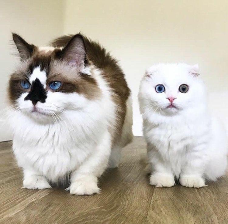 Online Dating voor Cat Lovers