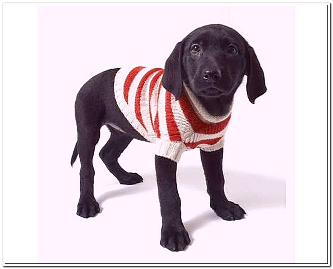 Ravelry: Easy Dog Sweaters pattern by Talking Tails | Crochet ...
